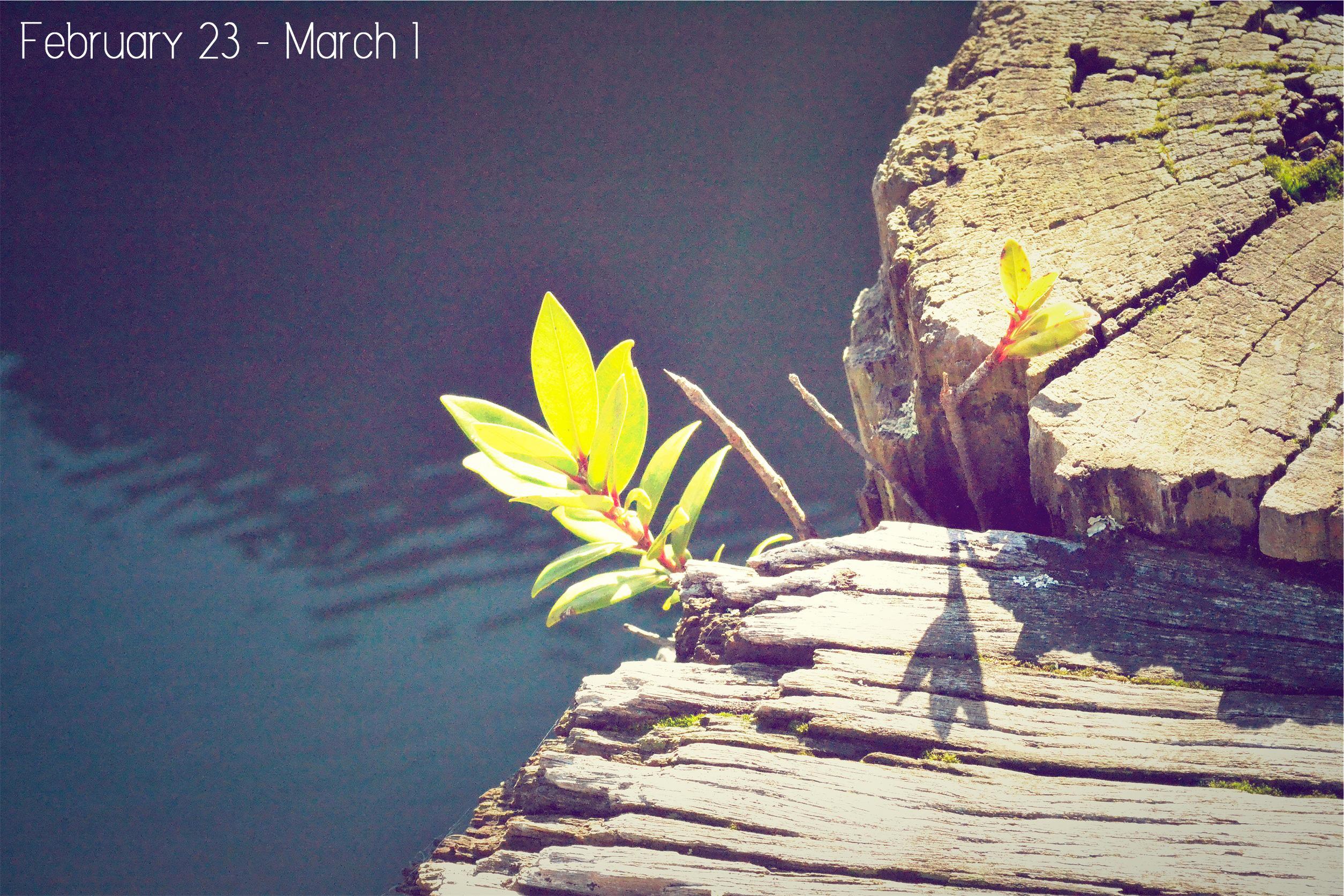 Feb21---Mar1