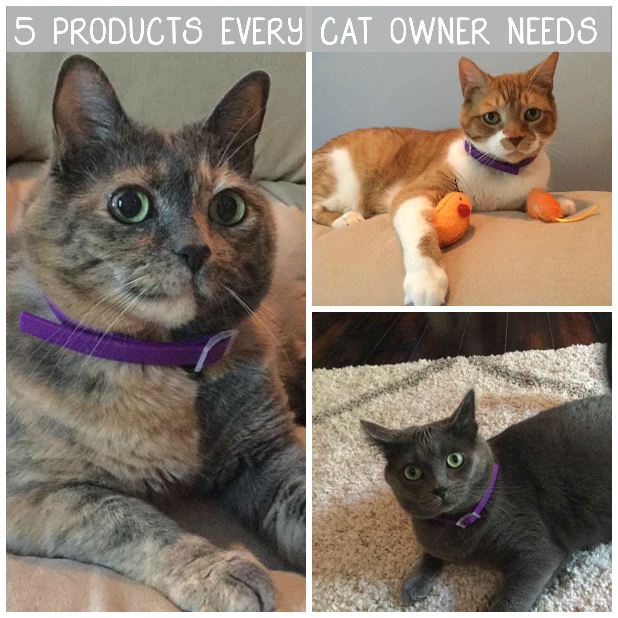 5-Products-Every-Cat-Owner-Needs